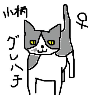 tnr_gurehachi.jpg
