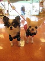 キューちゃん&ピンクちゃん T