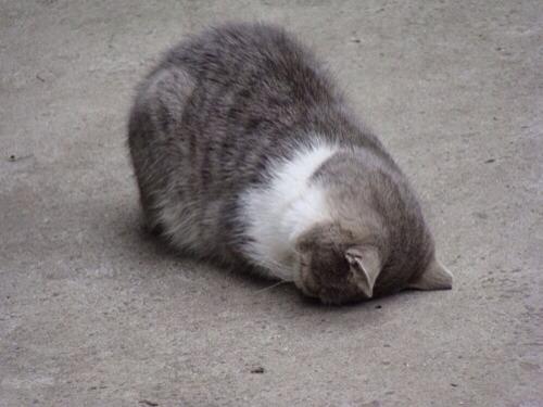 (=^ェ^=)猫画像★携帯専用39匹目YouTube動画>7本 ->画像>252枚