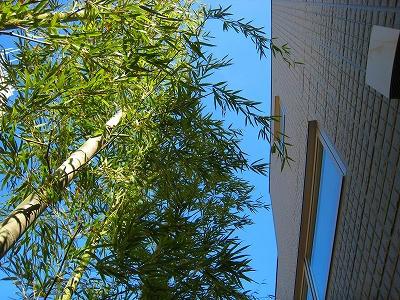 竹の緑と空の青