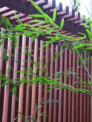 竹の葉の緑