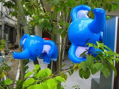ゾウのなる木