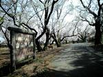 yamakami01.jpg