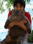 mi_wombat.jpg