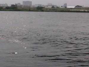淀川。。キレイ??