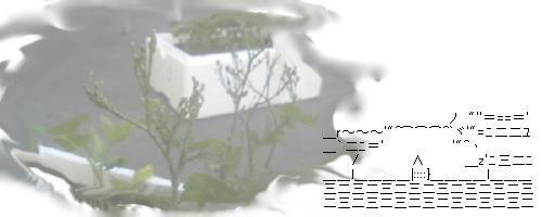77400381.JPG