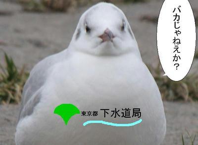 yurikamome01.JPG