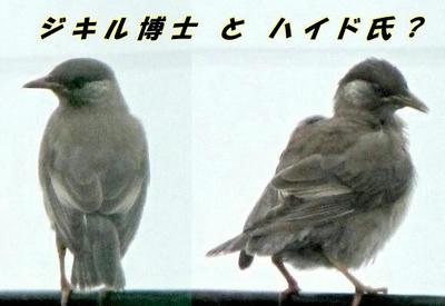 mukudori02.JPG