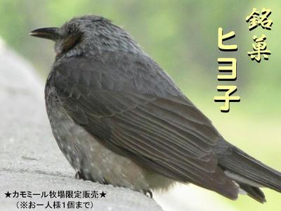 hiyodori01.jpg