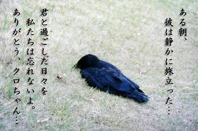kuro01.jpg