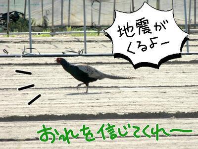 kiji02.jpg