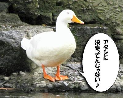 miss_ahiru02.jpg