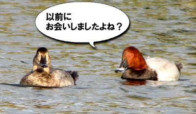hosihajiro02.jpg