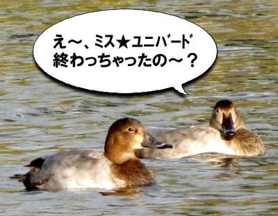 hosihajiro03.jpg
