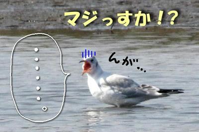 yurikamome03.jpg