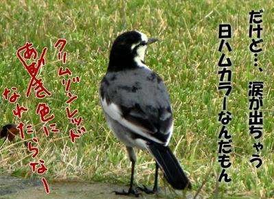 haku_sekirei05.jpg