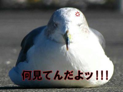 umineko01.jpg