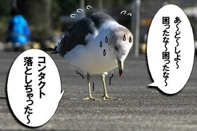umineko02.jpg