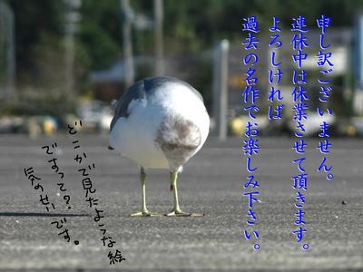umineko00.jpg