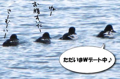 hojirogamo02.jpg