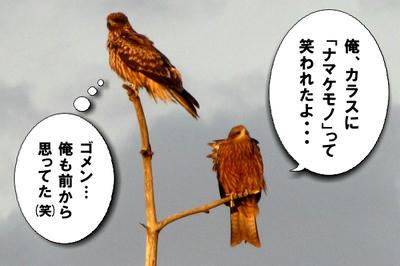 tonbi07.jpg