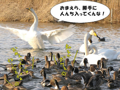 10_0101-2.jpg
