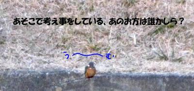 kawasemi01.jpg