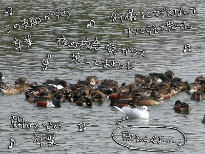 hasibiro01.jpg