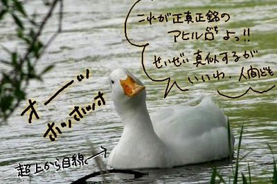 f5ba60a0.jpg