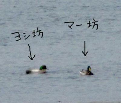 yosigamo2.jpg