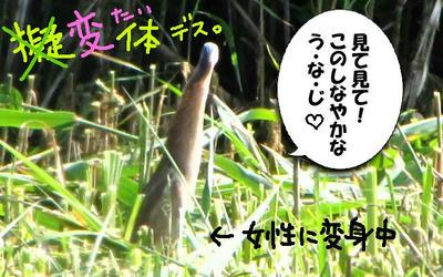 yosigoi04.jpg