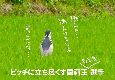 goirio.jpg