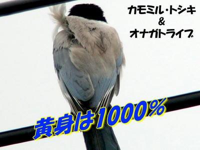 c16045d8.jpg