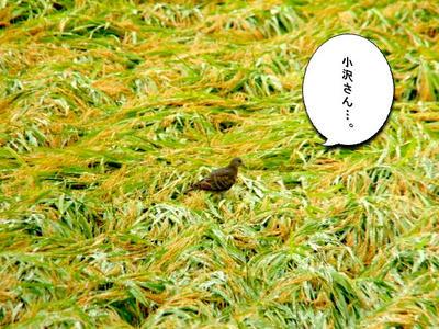 batoyama.jpg