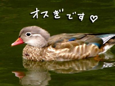 osugi.jpg