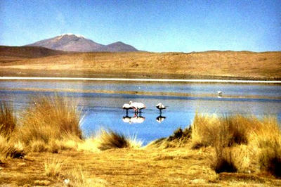 huramingo.jpg