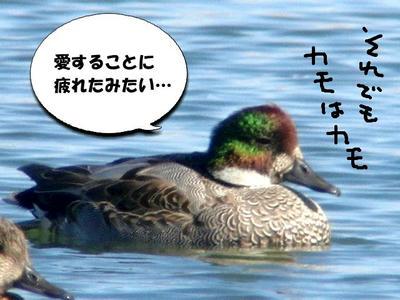 yosi01.jpg