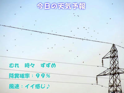 kawarahiwa.jpg
