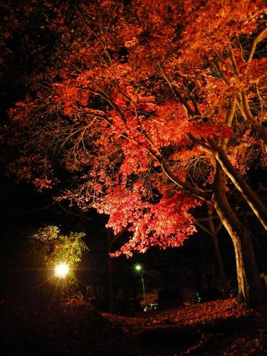 nagatoro081129_036.jpg