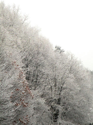 shibuonsen081213_036.jpg