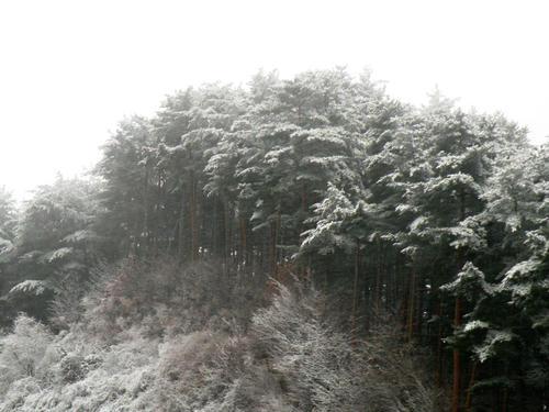 shibuonsen081213_039.jpg