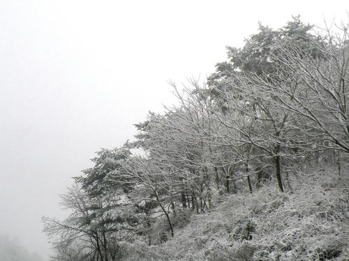 shibuonsen081213_041.jpg
