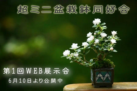 webexhibition01.jpg