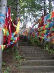 チベットの五色の祈祷旗の事をルンタという
