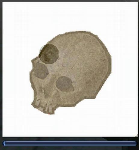 化石復元2