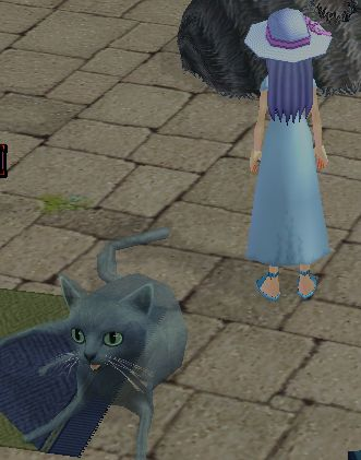 おっきな猫