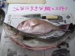 鯛とスズキ