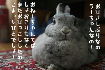 20091125_01.jpg