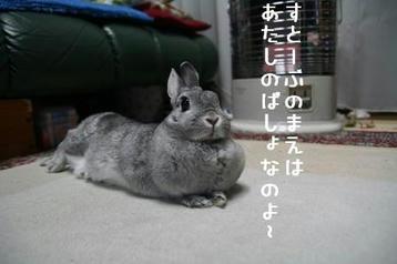 20091127_01.jpg