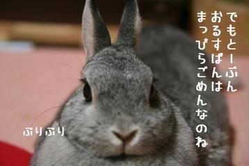 20091201_03.jpg